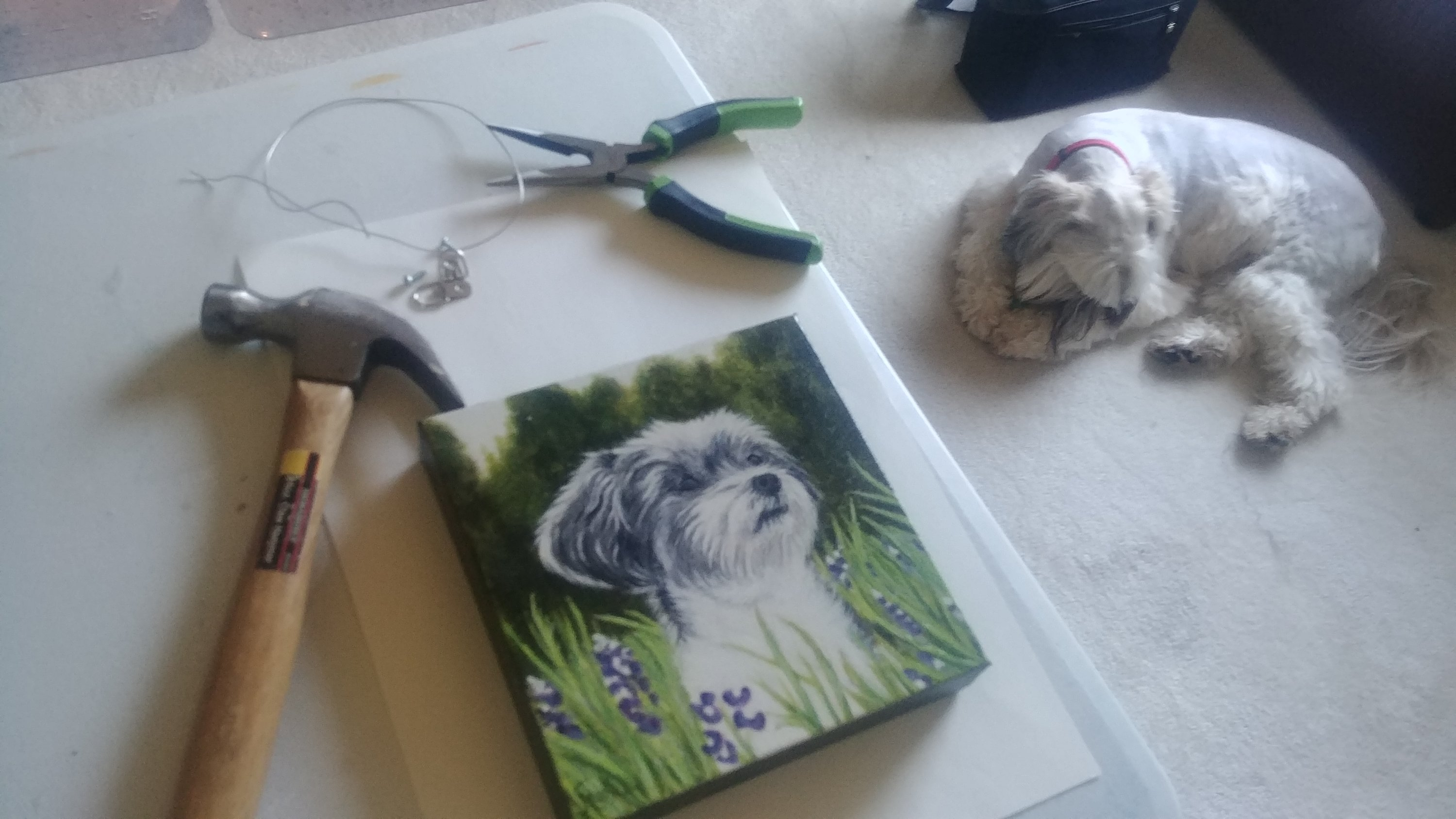 Pet Portraits by Sandra Mucha Artwork